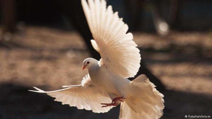 Symbolbild Friedenstaube, weiße Taube, Taube im Flug © chris-m #24067152 - Fotolia.com, , Undatierte Aufnahme, Eingestellt 13.03.2012