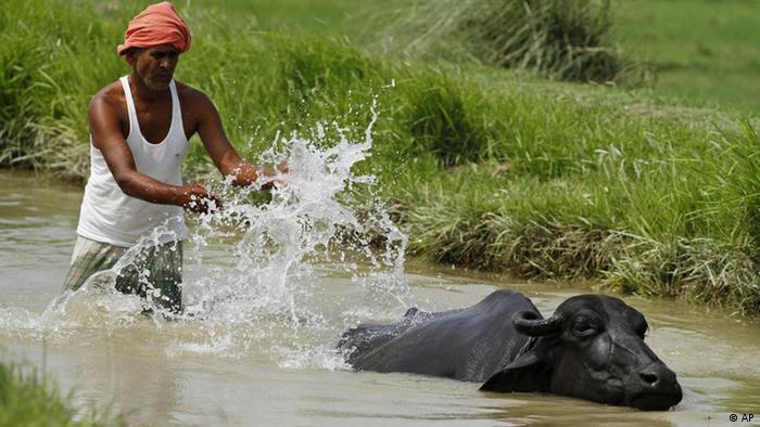 Indien Bauer Rind Büffel