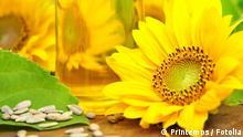 Sonnenblumenöl Fotolia