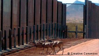 Deer stopped by border barrier