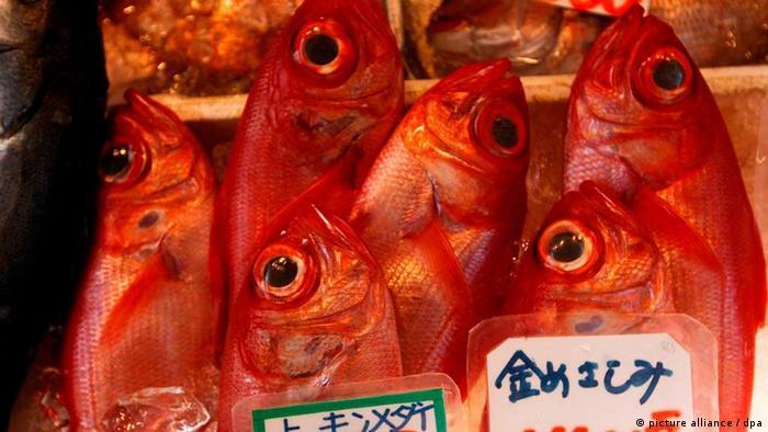 Contamination turns Tokyo's new fish market into 'white elephant' Asia