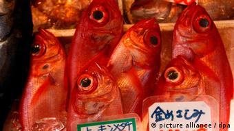 Fish for sale in Japan