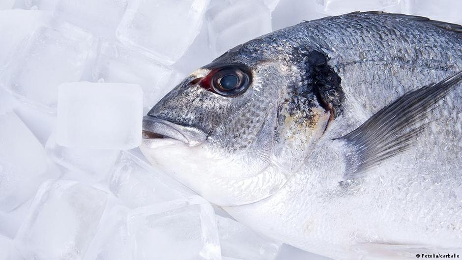 Video Ikan Beku Hidup Kembali Iptek Dw 05 02 2016