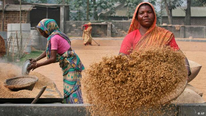Bangladesch Reis Frauen Frau Rangpur (AP)