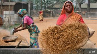 Bangladesch Reis Frauen Frau Rangpur