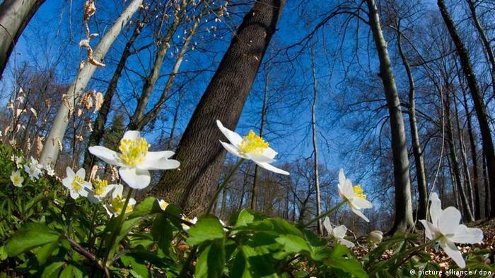 Bildergalerie Frühling Deutschland