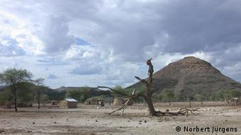A dried up tree surounded by a few houses
