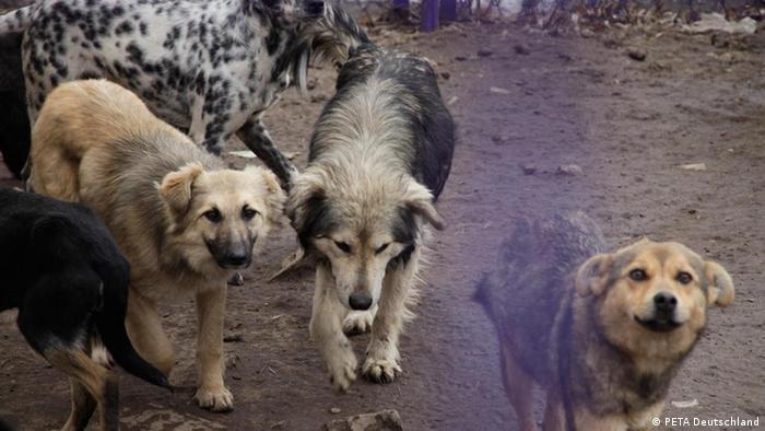 PETA Ukrainische Hunde