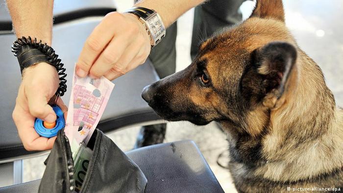 Deutschland Hundedame Dina jagt Bargeldschmuggler