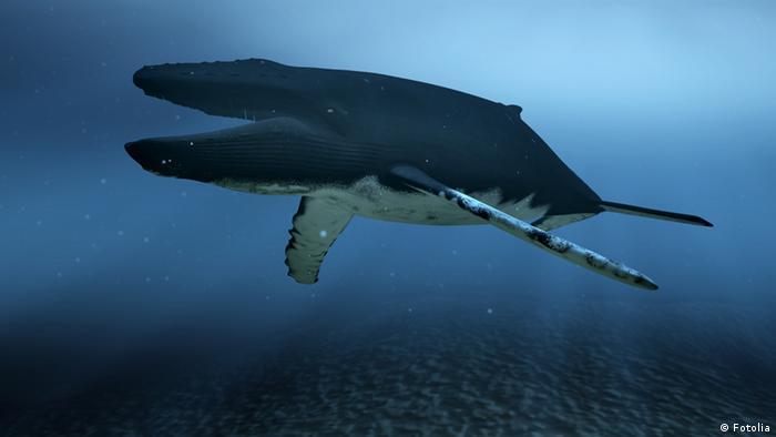 Biónica: de la ballena al helicóptero | Ciencia y Ecología | DW ...
