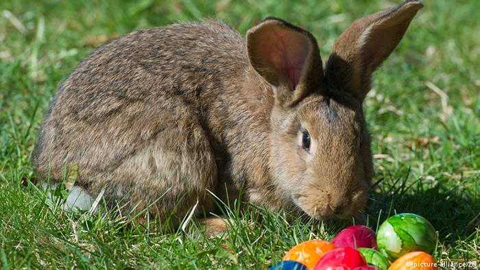 Ein Kaninchen und bunte Ostereier auf einer Wiese.