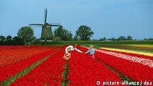 Eine Mutter mit Kind beim Pflücken roter Tulpen auf einem Tulpenfeld in Holland. Im Hintergrund steht eine Windmühle. Undatiert.