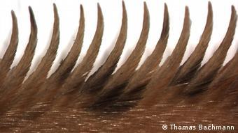 penampang sisi depan sayap burung hantu