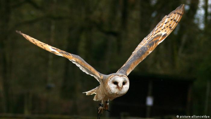 barn owl Photo: Carsten Rehder dpa/ln