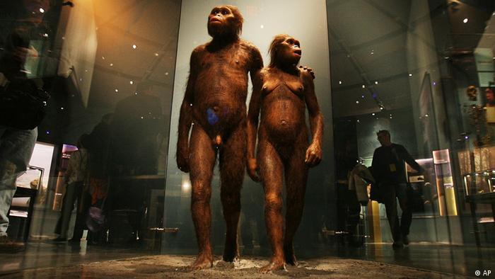 Zwei Hominiden, menschliche Entwicklung und Evolution