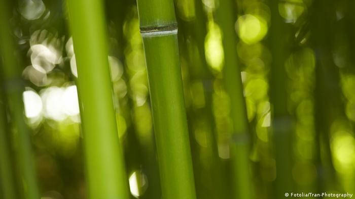 Bambus Bamboo Keywords asian asien bamboo bambus baum bär china dschungel entspannen fernost flexibel forest friedlich frühling garten gewächs gras green groß grün halm idylle japan jungle korea lebensraum natur panda pflanze phyllosstachys plant poaceae reihen relax riesenbambus rohr schilf stabil stamm stark struktur tropisch urlwald vegetation vertikal vietnam viridiglaucescens wachsen wald wood Land Deutschland URL http://de.fotolia.com/id/24255052