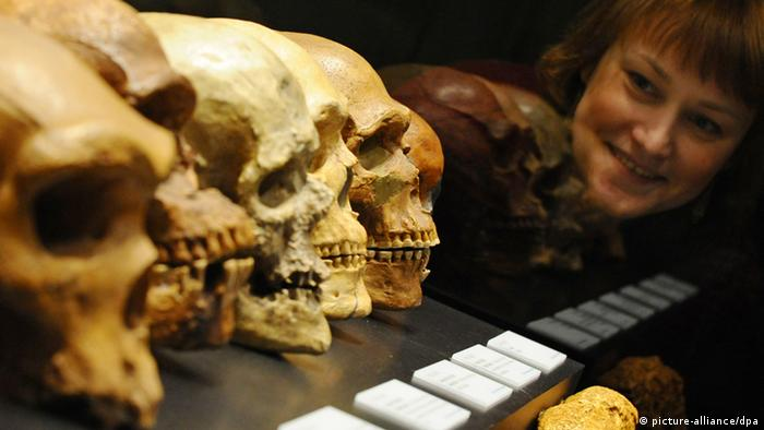 Woman gazing at Homo Sapiens skulls in a museum (picture-alliance/dpa)