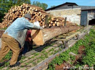 Gute Geschäfte mit Holz in den baltischen Staaten