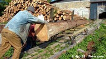 Riga Lettland Ein Arbeiter in einer kleinen Holzfabrik schiebt einen Baum