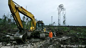 Forest destruction in Indonesia.