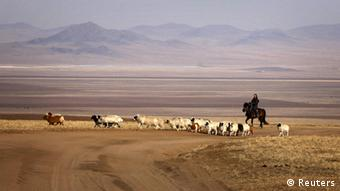 A female herder riding a horse tends her animals on grasslands