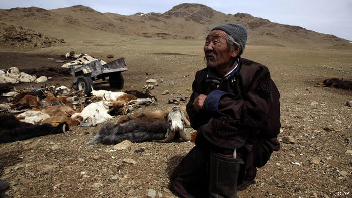 A Mongolian man stands with his goats