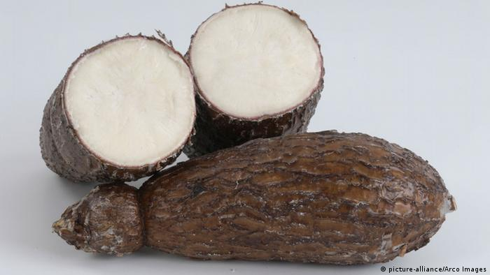 cassava roots showing the brown exterior and grey interior