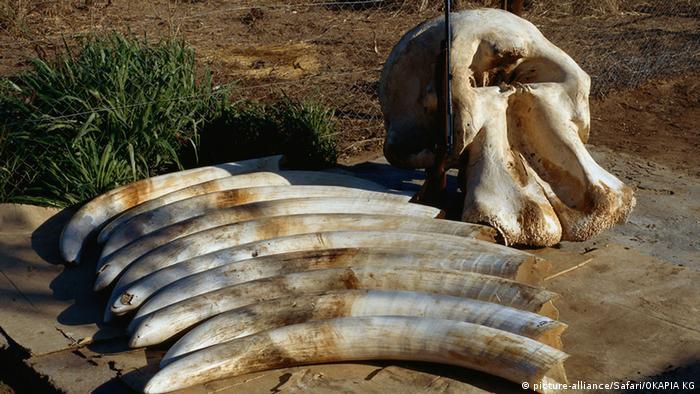 Symbolbild Elefantenjagd Elefant Elefanten Namibia Afrika