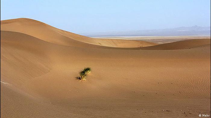Eine einsame Pflanze in der Wüste