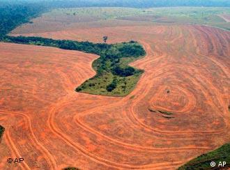 Deforestación: cultivos de soya en Novo Progreso, Brazil.