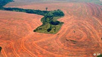 Brandrodung in Brasilien Urwald Ackerland