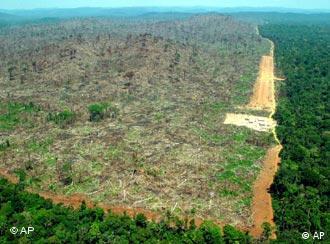 Aumento de desmatamento continua repercutindo no exterior