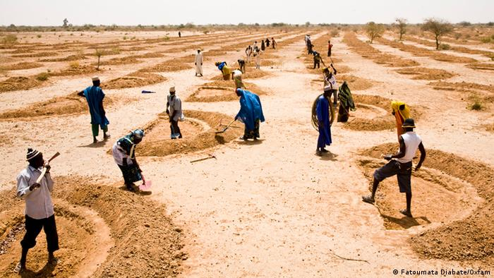 A group of agriculture workers in a dry, dusty field in Niger