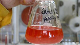 Dr. Andreas Geist vom Karlsruhe Institut für Technologie hält einen Glaskolben mit einer wässrigen und einer öligen Phase, die Teil von Versuchen zur Flüssig-flüssig Extraktion von Aktiniden sind. Das Experiment dient dazu, Komplexbildner zu identifizieren, die geeignet sind Aktinide zu binden. (Foto: Fabian Schmidt/DW)