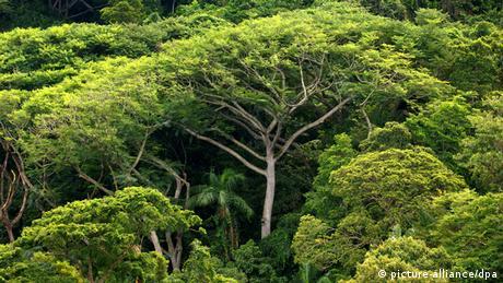 Regenwald in Brasilien (picture-alliance/dpa)