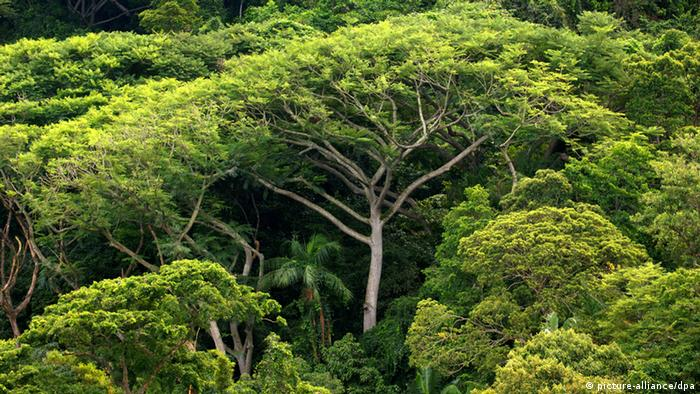 Trees in Brazil, Amazon (picture-alliance/dpa)
