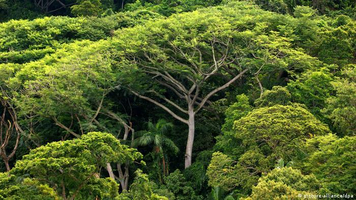 Der Amazonas-Regenwald im Brasilien. (Foto: dpa - Bildfunk)