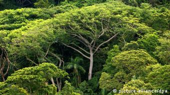 Brasilien lockert Regenwald-Schutz