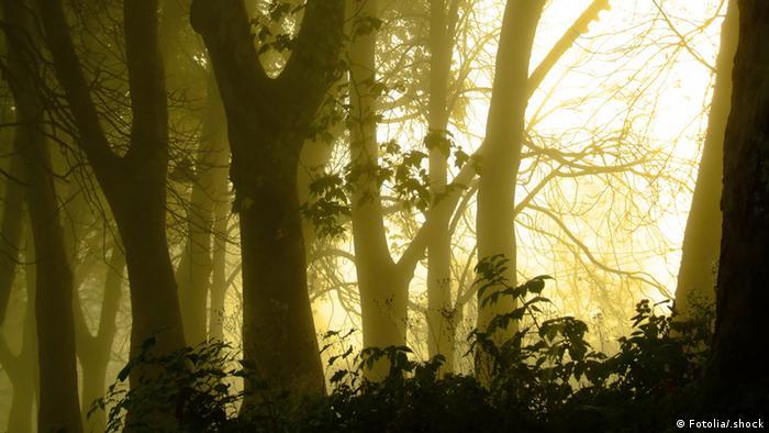 Wald Stimmungsvolle Aufnahme