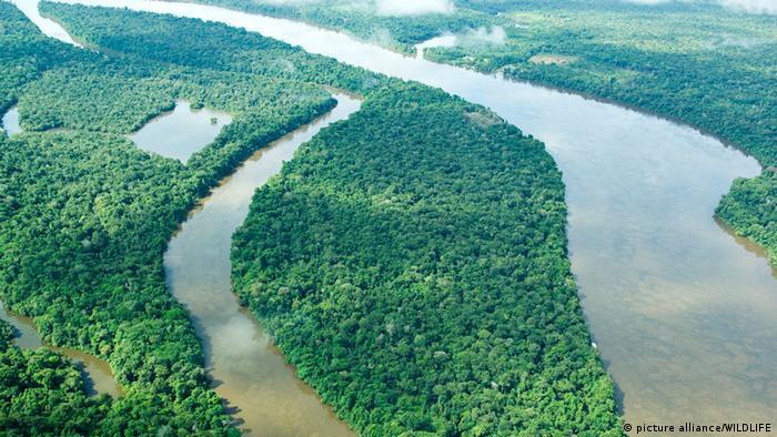 Amazonas Regenwald Amazonien Amazonasregenmal Dschungel Fluss (picture alliance/WILDLIFE)