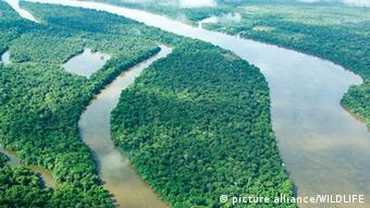 Amazonas Regenwald Amazonien Amazonasregenmal Dschungel Fluss