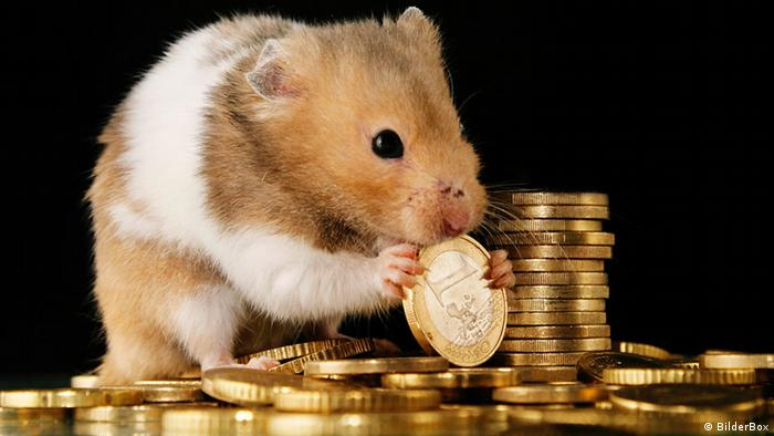 Mouse eating away on a pile of euro coins
