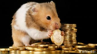 Mouse nibbling on euro coin, sitting in midst of coins