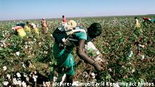 Symbolbild Afrika Baumwollernte