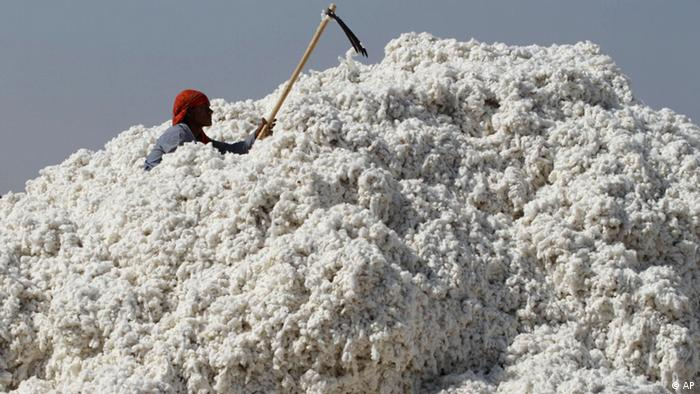A worker submerged in a mountain of raw cotton in India
