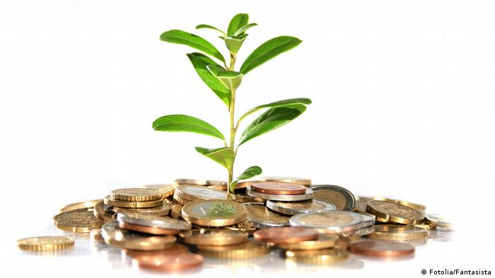 Money and plant. Isolated on white background.