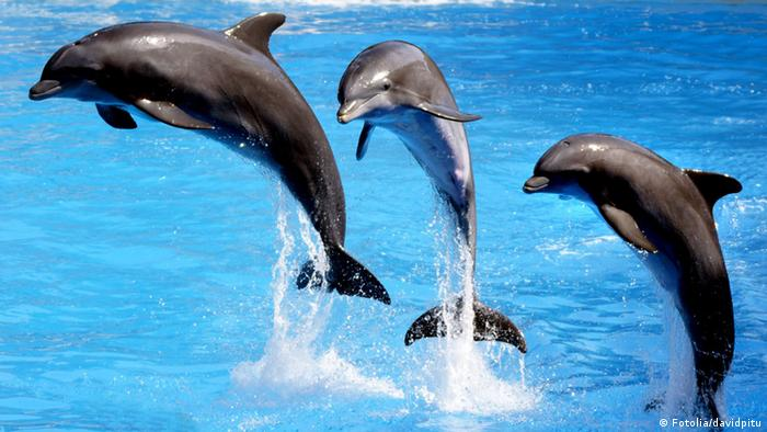 delfin en acrobacia © davidpitu #28124646