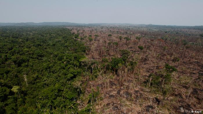 A deforested area of the Amazon rainforest, Brazil (Picture: dapd)