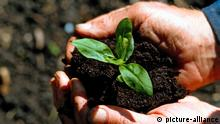 A handful of soil with a small plant growing inside (picture-alliance)
