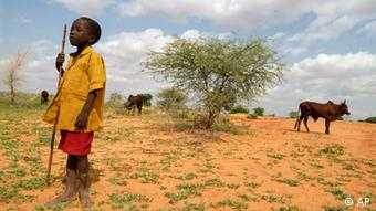A youth leads cattles to graze in dry land outside Maradi (Photo: AP/George Osodi)